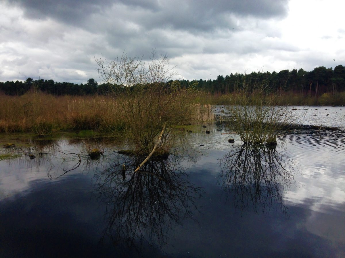 Fountain of Travel Delamere Forest Spring Lake
