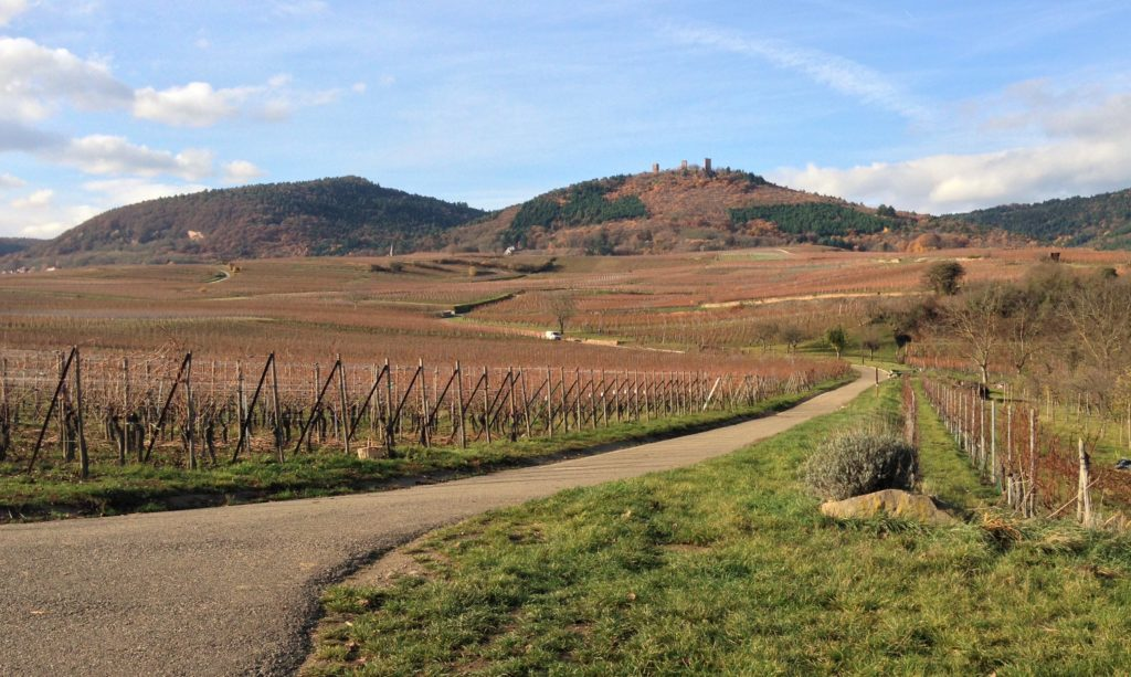 Fountain of Travel How to Spend 24 Hours in Eguisheim Vineyard